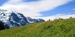 Waarom Zwitserland? Als incentive bestemming..